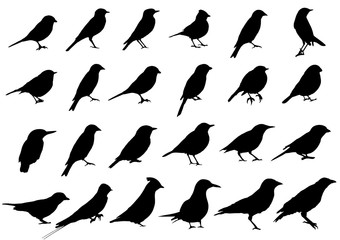 Birds silhouettes collection Fotomurales
