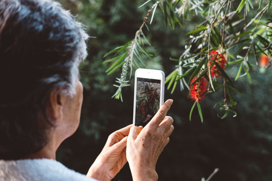 Side view of woman photographing plants with smart phone in yard