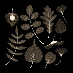 Vector set of high detailed skeleton leaves