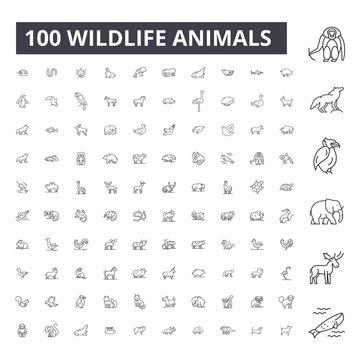 Wildlife animals editable line icons, 100 vector set on white background. Wildlife animals black outline illustrations, signs, symbols