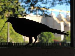 Black silhouette of bird in window with colorful background of forest and blurred hydroelectric.