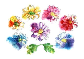 Decorative set of chrysanthemum flowers and leafs. Watercolor sketch. Hand-drawn illustration