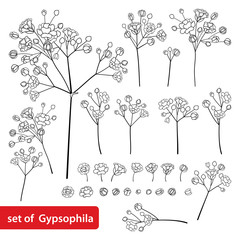 Vector set with outline Gypsophila or Baby's breath branch, bud and delicate flower in black isolated on white background. Ornate Gypsophila bunch in contour style for spring design or coloring book.