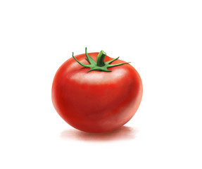 A tomato. Painted Tomato Image Isolated on White Background