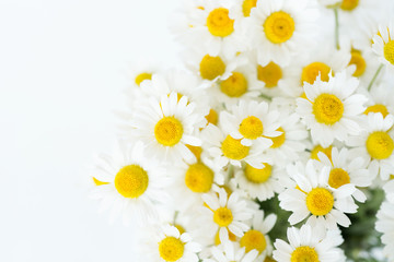 Chamomile or daisy flowers on white background.  Wall mural