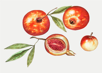 Pomegranate in vintage style