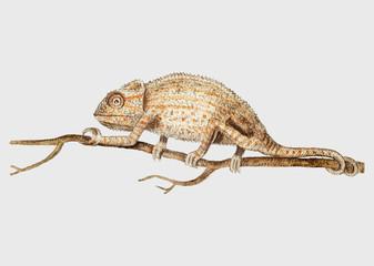 Chameleon in vintage style