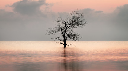 Dead tree in the lake with beautiful light reflection at Pakpra village.