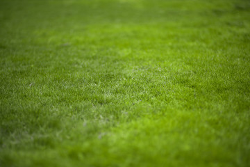 Green grass texture background. Summer or spring backdrop