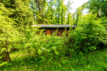 Old cabin hidden in the woods at spring