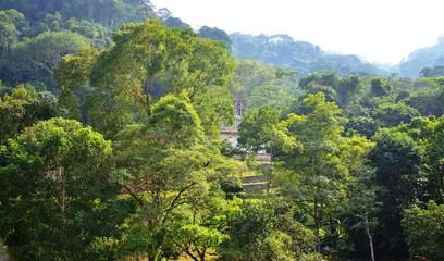 Mexico Jungle Landscape in Chiapas