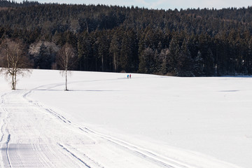 Ski track, Ski Cross-Country Skiing, Winter Landscape