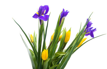 bouquet of iris and tulips