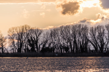 Trees silhouettes on Trasimeno lake with warm sunset colors