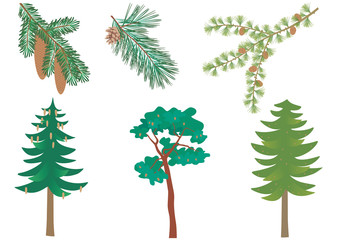Vector set of three common European forest trees with detail of needles and cones. Picea abies, pinus sylvestris, larix decidua.