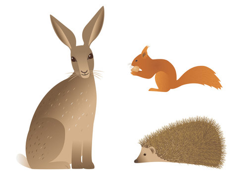 Vector image of hedgehog, squirrel and hare.