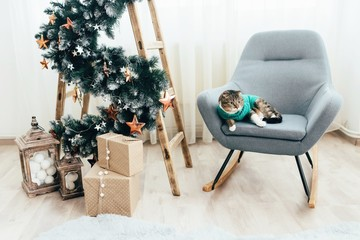A striped cat, dressed in a green sweater, falls on a chair near a Christmas tree