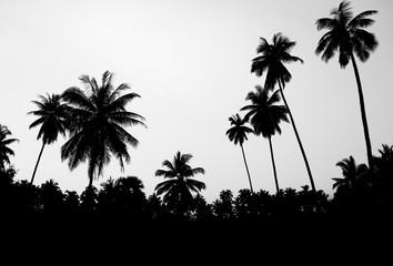 Silhouette of palm trees by the sea