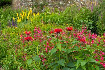 Colouful English summer garden flower border