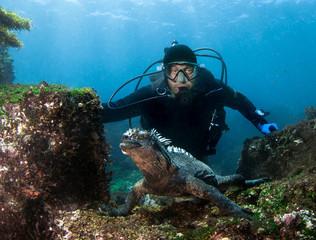 Foto op Canvas Duiken Scuba diver observes Marine Iguana (Amblyrhynchus cristatus) .