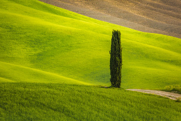 Tuscany landscape in spring green meadows of italia