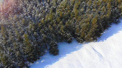 Aerial. Winter pine forest background.