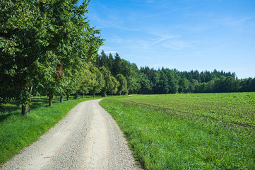 A trail in upper Bavaria with trees and a blue sky with soft white clouds
