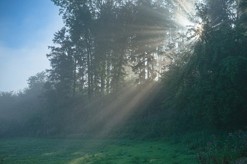 Sun rays shining through the trees in the morning
