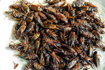 Insect pile fried crickets on white blackground. is one of the insects that are considered the best food or super foods. because tasty and nutritious very. is snack street food of Thailand.