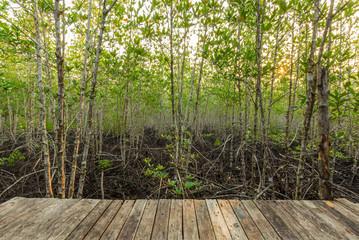 Mangrove forest at Sai Dham Beach, Trat Province, Thailand