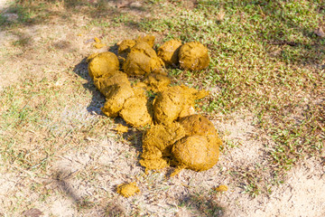 A Thai Elephant with ELEPHANT DUNG uses for the by-product, For example, Filling holes in the road, Paper, Fertilizer.