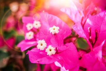 Spoed Foto op Canvas Roze Beautiful flowers on the sea background