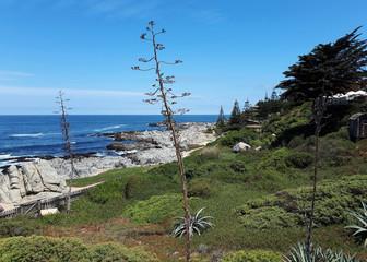 Landschaft an der Pazifikküste in Chile