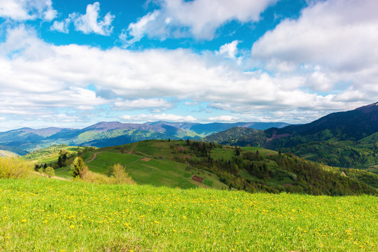 springtime in mountains. beautiful countryside landscape. grassy meadow with dandelions. fluffy clouds on the sky.