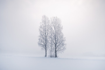 Misty landscape with trees and fog at winter morning in Finland