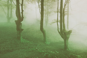 vintage spooky forest with fog