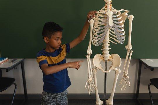 Front view of schoolboy explaining human skeleton model in