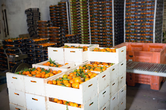 Stacks of fruit boxes with fresh ripe mandarin oranges in storage warehouse