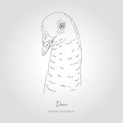 Vector hand drawn realistic sketch illustration of dove bird profile portrait