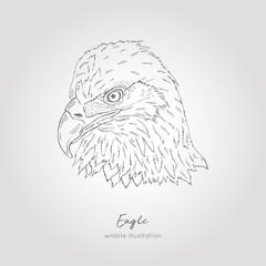 Hand drawn vector illustration of eagle profile view head Bird sketch
