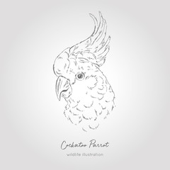 Realistic hand drawn vector sketch of cockatoo parrot head profile view