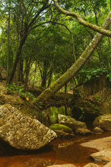 Slow red river in a dense green rainforest. Landscape of the flow of water through the forest thicket. Journey along the river