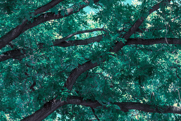 Abstract background with tree branches