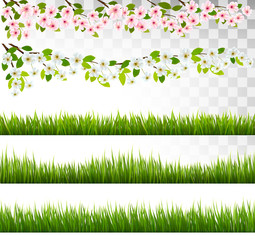 Fototapete - Several grass and blossom of cherry and sakura borders. Vector.