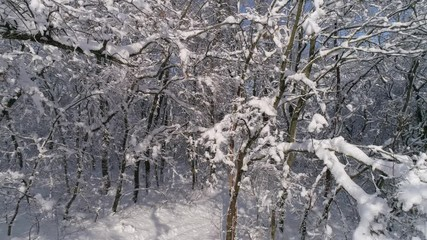 Wall Mural - Beautiful winter forest covered with snow, slider dolly shot 4k