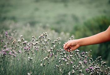 Child hand touching the beautiful purple and white flowers
