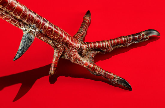 A turkey foot on a red background