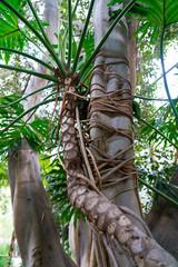 Unique Tree Bark and Plant Texture