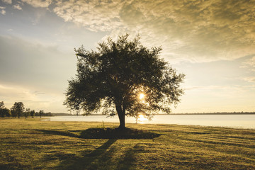 alone tree silhouette on riverside lake with sunset or sunrise on green meadow in countryside