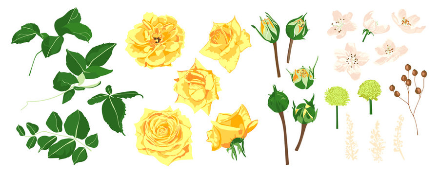 Floral Wedding Set. Vector Roses Bouquet.